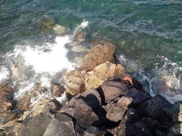 Krabben auf Felsen
